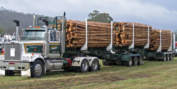 Hard-Working Employees Drive Forest Product Industry Success